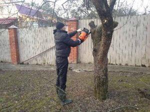 санитарная обрезка деревьев весной