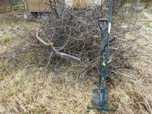 срубленные ветви кустарника