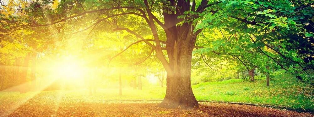 красивое дерево на закате