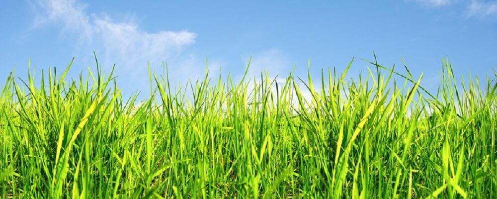 трава на даче